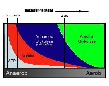 Energiebereitstellung bei zunehmender Belastungsdauer.